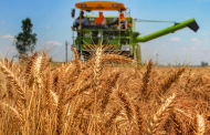 Which states bought how much wheat for central pool, read full report