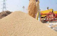 Government procurement of wheat starts in Punjab's mandis today, may be discussed with CM again