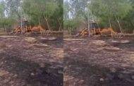 Embarrassing deeds of former head stunned by defeat, 200 m road dug from JCB
